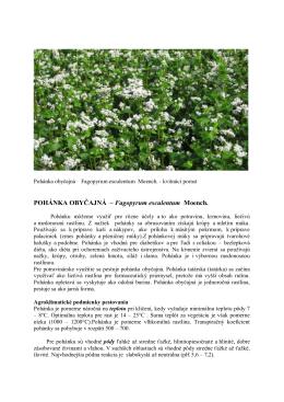 POHÁNKA OBYČAJNÁ – Fagopyrum esculentum Moench