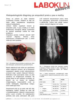 Histopatologické diagnózy po amputácii prsta u psa a