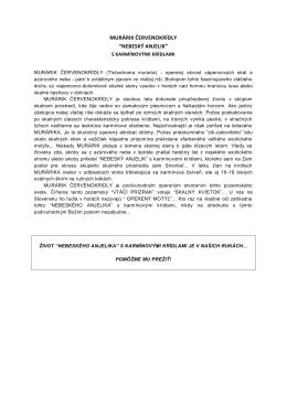 """MURÁRIK ČERVENOKRÍDLY """"NEBESKÝ ANJELIK"""""""