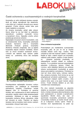 Časté ochorenia u suchozemských a vodných korytnačiek