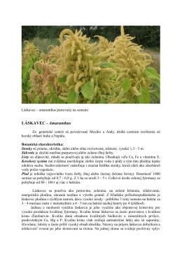 Láskavec - Amaranthus