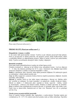 PROSO SIATE (Panicum miliaceum L.)