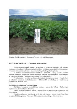 ĽUĽOK ZEMIAKOVÝ (Solanum tuberosum L