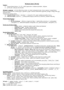 DS.pdf - Webnode