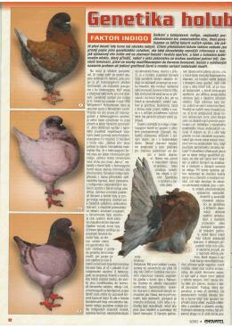 Genetika holubov v fotografiach faktor indigo