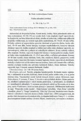 8. Viola xwittrockiana Gams Fialka záhradná (sirótka) Jednorocná