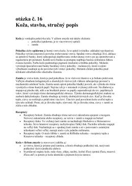 otázka č. 16 Koža, stavba, stručný popis