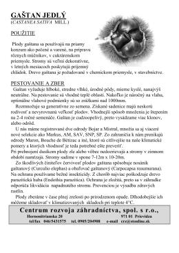 Gaštan jedlý - Centrum rozvoja záhradníctva, spol. s ro