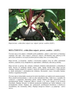 REPA ČERVENÁ - cvikla (Beta vulgaris provar. conditiva (ALEF.)