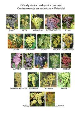 Odrody viniča dostupné v predajni Centra rozvoja záhradníctva v