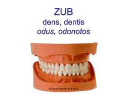 Zuby - Anatomie 3.LF