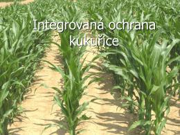 Systémy integrované ochrany kukuřice