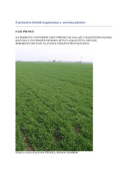 Zelena prognoza 10032016