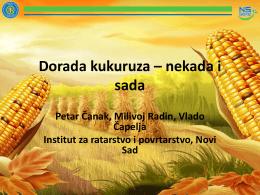 Dorada kukuruza – nekada i sada