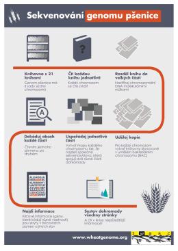Sekvenování genomu pšenice