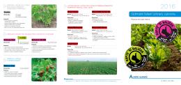 Ochrana cukrovky - Agro Aliance sro