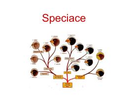 Typologická koncepce druhu