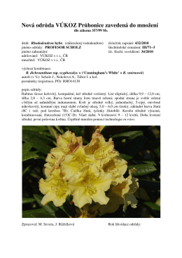 Rhododendron PROFESOR SCHOLZ 2010