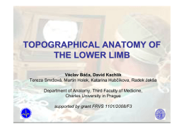 Topographical Anatomy of the Lower Limb