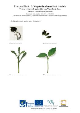 Pracovní list č. 6: Vegetativní množení trvalek