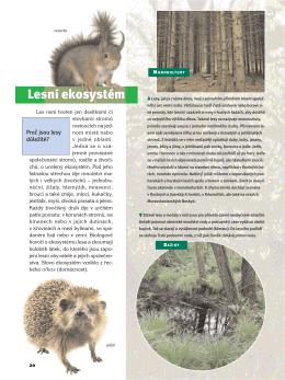 Lesní ekosystém