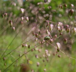 2 - Naturführer Osterzgebirge