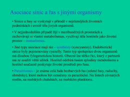 Glaucophyceae