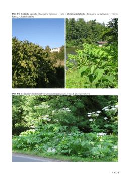 XXXIII Obr. 8/1: Křídlatka japonská (Reynoutria japonica) – vlevo a