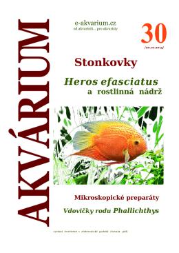 Stonkovky - e