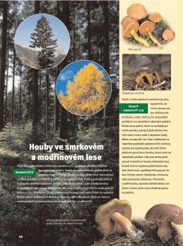 Houby ve smrkovém a modřínovém lese