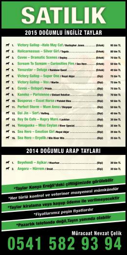 2015 doğumlu ingiliz taylar 2014 doğumlu arap tayları