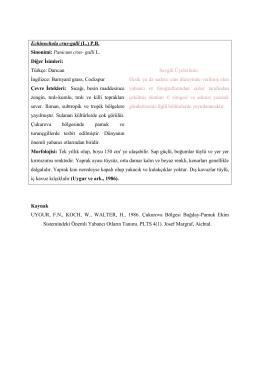 Echinochola crus-galli (L.)
