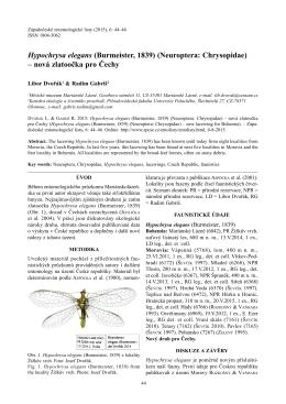 Hypochrysa elegans (Burmeister, 1839) (Neuroptera: Chrysopidae