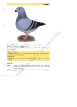 Standard plemene ze Vzorníku plemen holubů