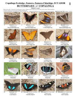 BUTTERFLIES of COPALINGA - Field Guides