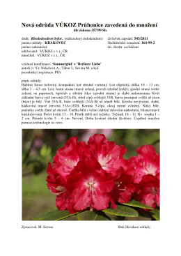 Rhododendron KRAKOVEC 2011