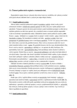 11. Činnost pohlavních orgánů a rozmnožování