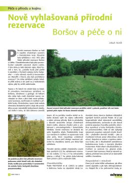 Nově vyhlašovaná přírodní rezervace Boršov a péče o ni