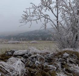 Bergwiesen und Borstgrasrasen | Horské louky a smilkové trávníky