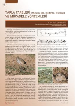 TARLA FARELERİ [Microtus spp. (Rodentia: Muridae)] VE