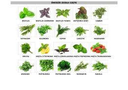 świeże zioła cięte - firma