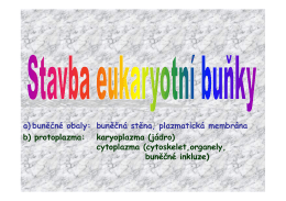 Buňka-eukaryotní