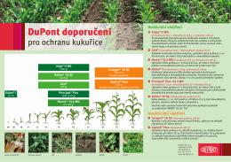 Doporučení pro ochranu kukuřice