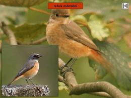 Př. 7 ptáci - poznávačka