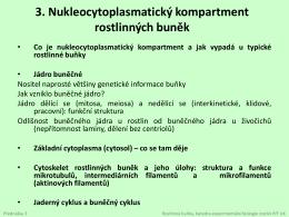Nukleocytoplasmatický kompartment rostlinných buněk