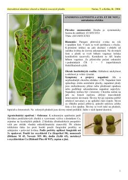 gnomonia leptostyla