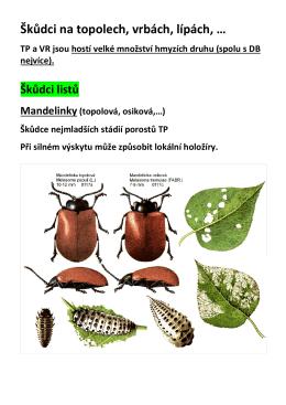 NOL_Hmyzí škůdci topolu, vrby, olše, lípy a ostatních