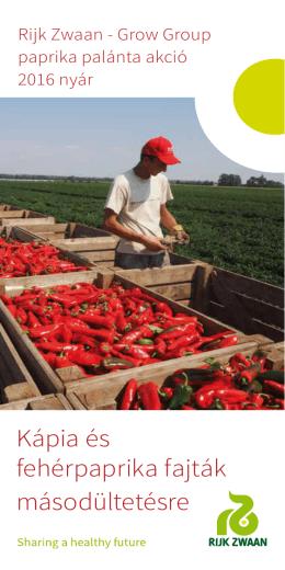 Paprika palánta akció 2016 nyár
