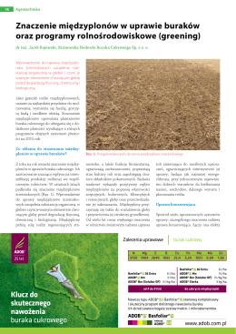 Znaczenie międzyplonów w uprawie buraków oraz programy