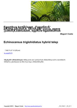 Egzotikus kertészet - Fagytűrł pálma, pálmák, télálló